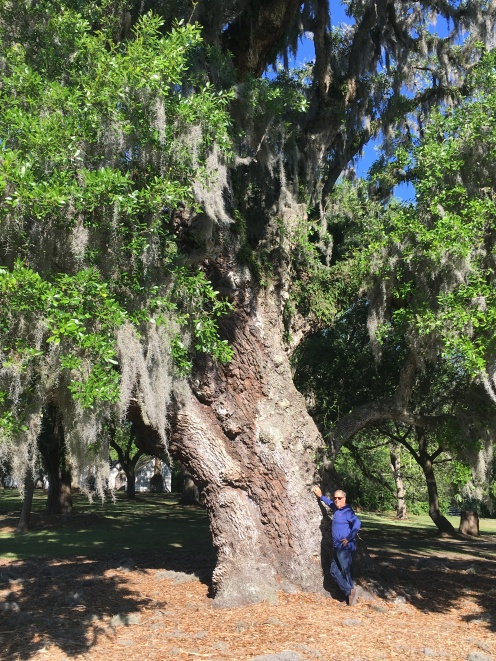 witness tree with William